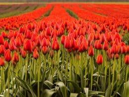 flores-mercado-mundial