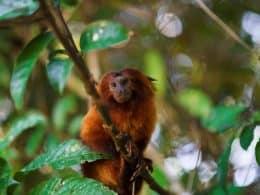 micos da bolsa