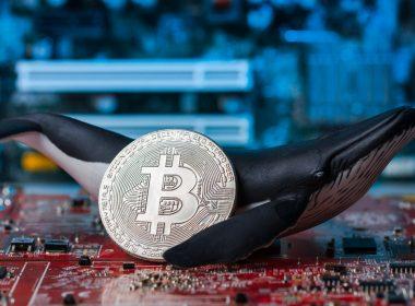 Baleias acumulam grandes valores de Bitcoin com a queda do mercado
